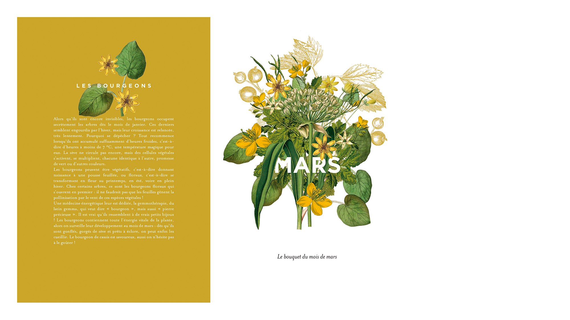 trc_agenda-herbier_mars_stil