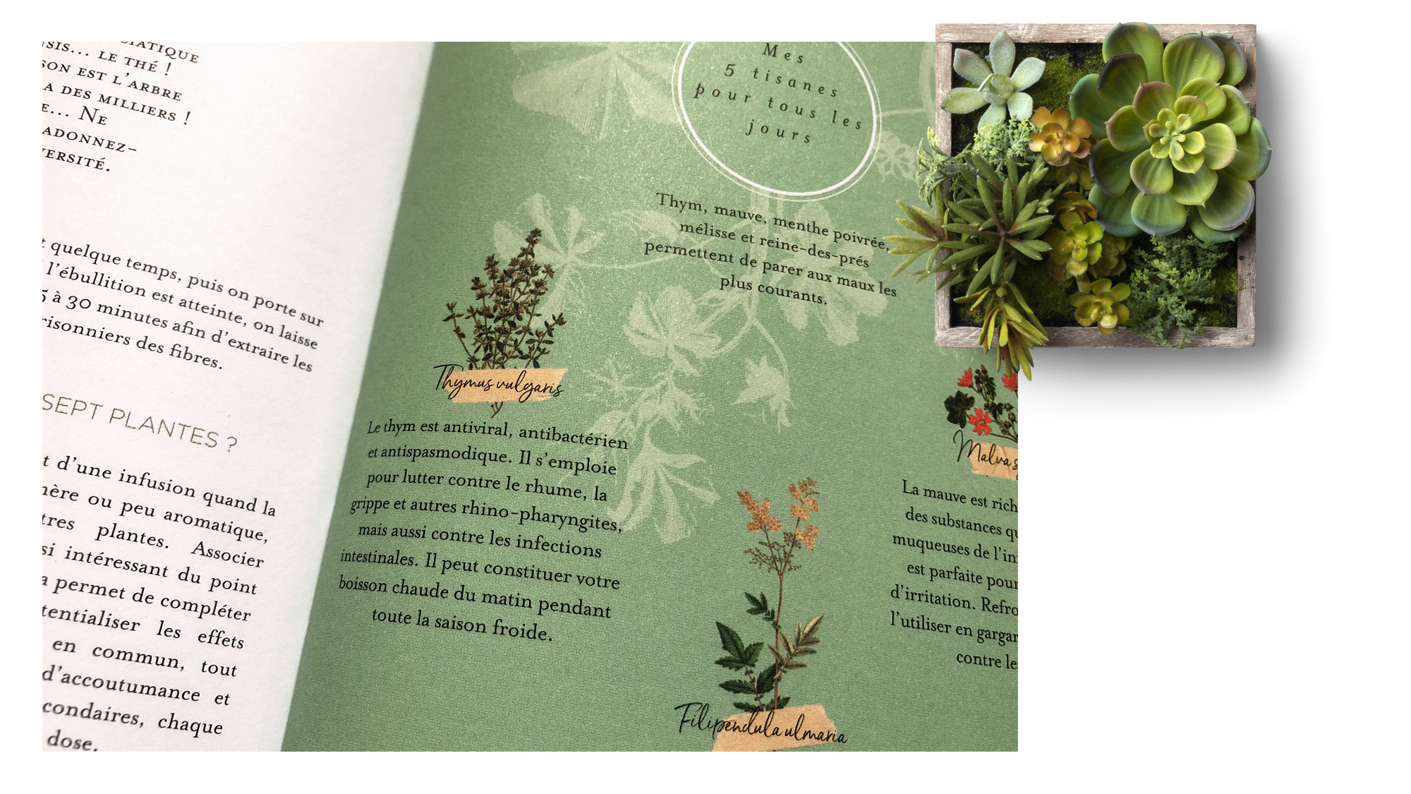 trc_agenda-herbier_plantes_printed